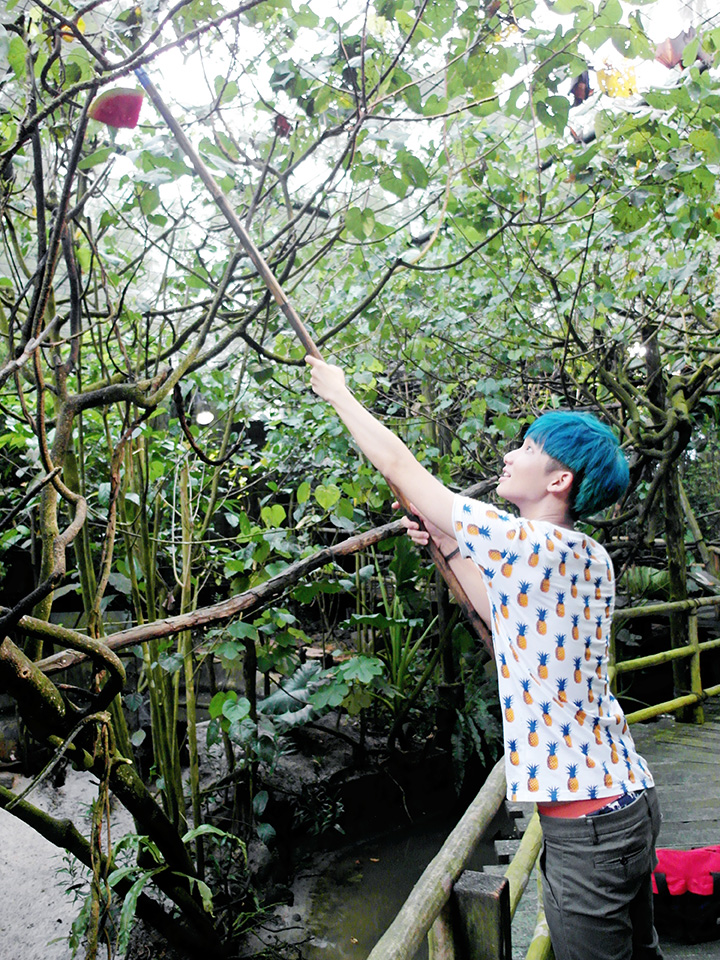 typicalben placing fruits at singapore night safari