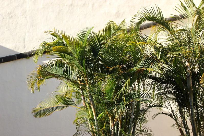 Madeira, Funchal 2014 + ostokset 267