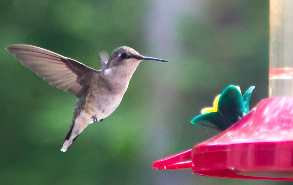 Hummingbird Brekky