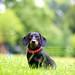 Kai   Dog Portrait Photography London by Bridget Davey (www.bridgetdavey.com)
