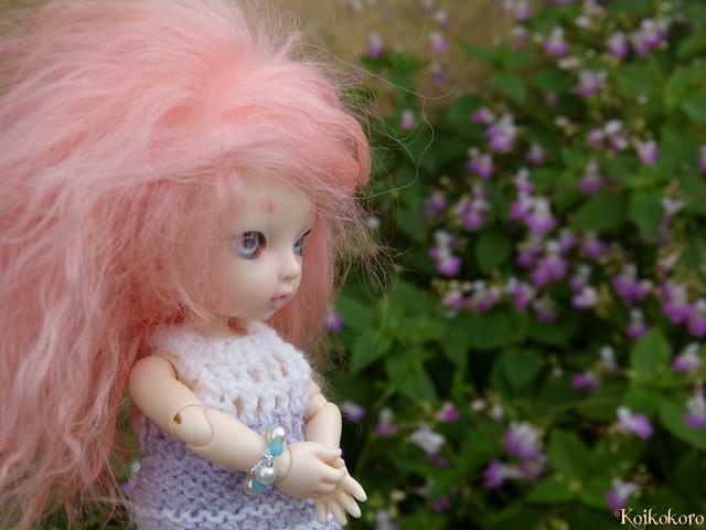 Dragée au jardin