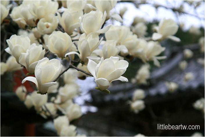 奈良公園-19