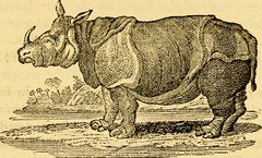 "Image from page 193 of ""A general history of quadrupeds : the figures engraved on wood"" (1800)"