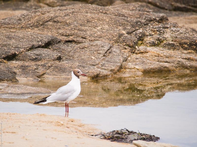 Dans le Golf du Morbihan 14599456938_7c892803f4_c