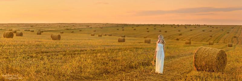 Ukrainian Field