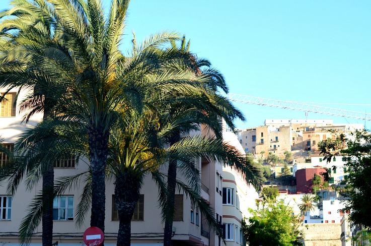 DSC_2977 Ibiza Town, palmtrees