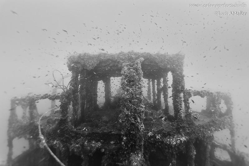 Francisquita Wreck - 1