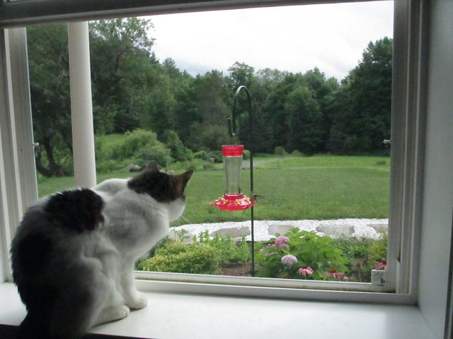 Penny watching hummingbird