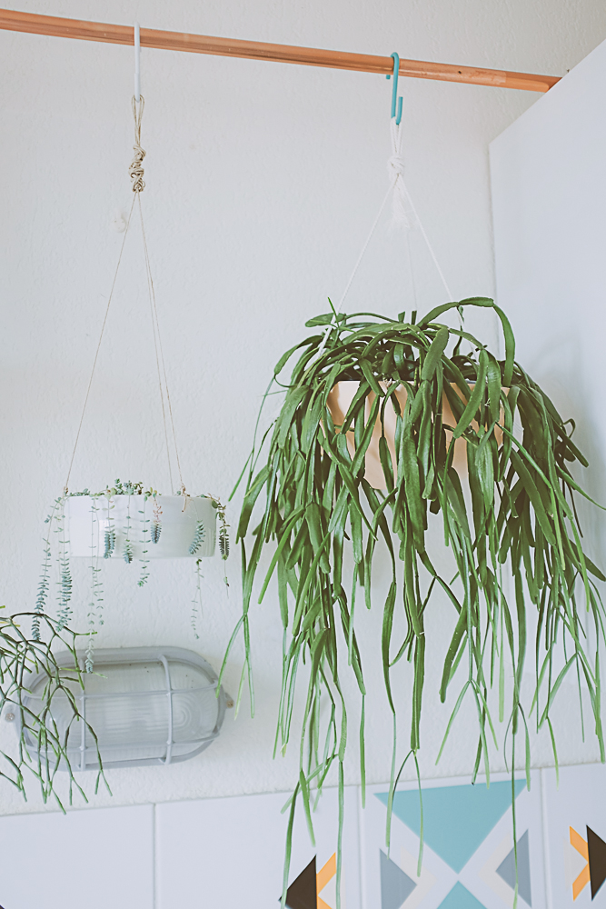 tringle en cuivre et plantes suspendues