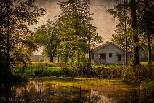 house field sunrise georgia pond farm cypress hay bullochcounty chuckleefarm