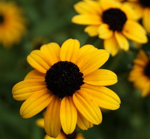 Flors a Central Park (Nova York)