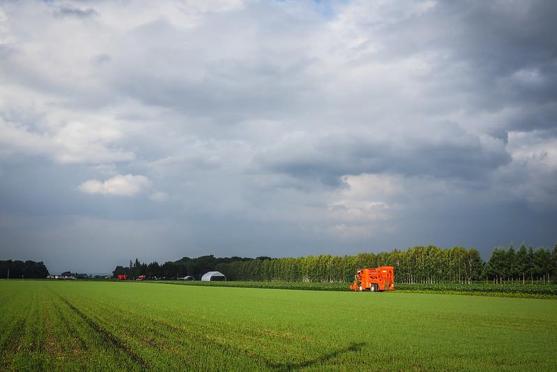 Edamame harvesters in the Tokachi region, Hokkaido, Japan