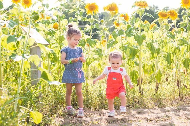 2014-08-08 Sunflower maze-036.jpg