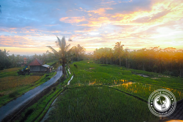 Rice Field Sunset