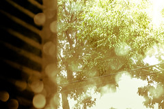 Summer light through the window