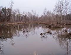 Wetland in Crab Orchard Lake Wildlife Refuge, Illinois