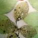 youliana manoleva posted a photo:Seta, stampa botanica a impressione.
