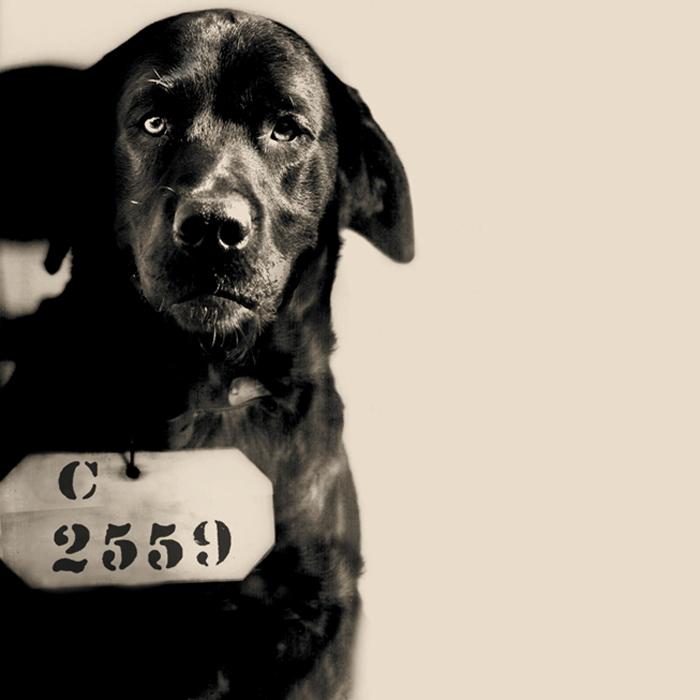 "Circa 1924: Pep, ""The Cat-Murdering Dog"""