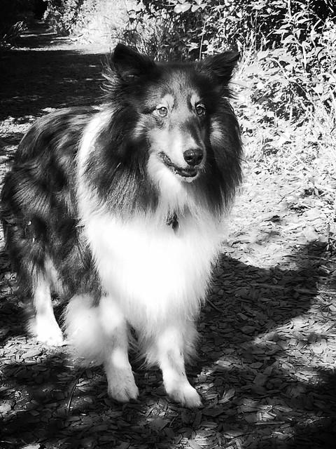 Focused Jasperoo in black and white