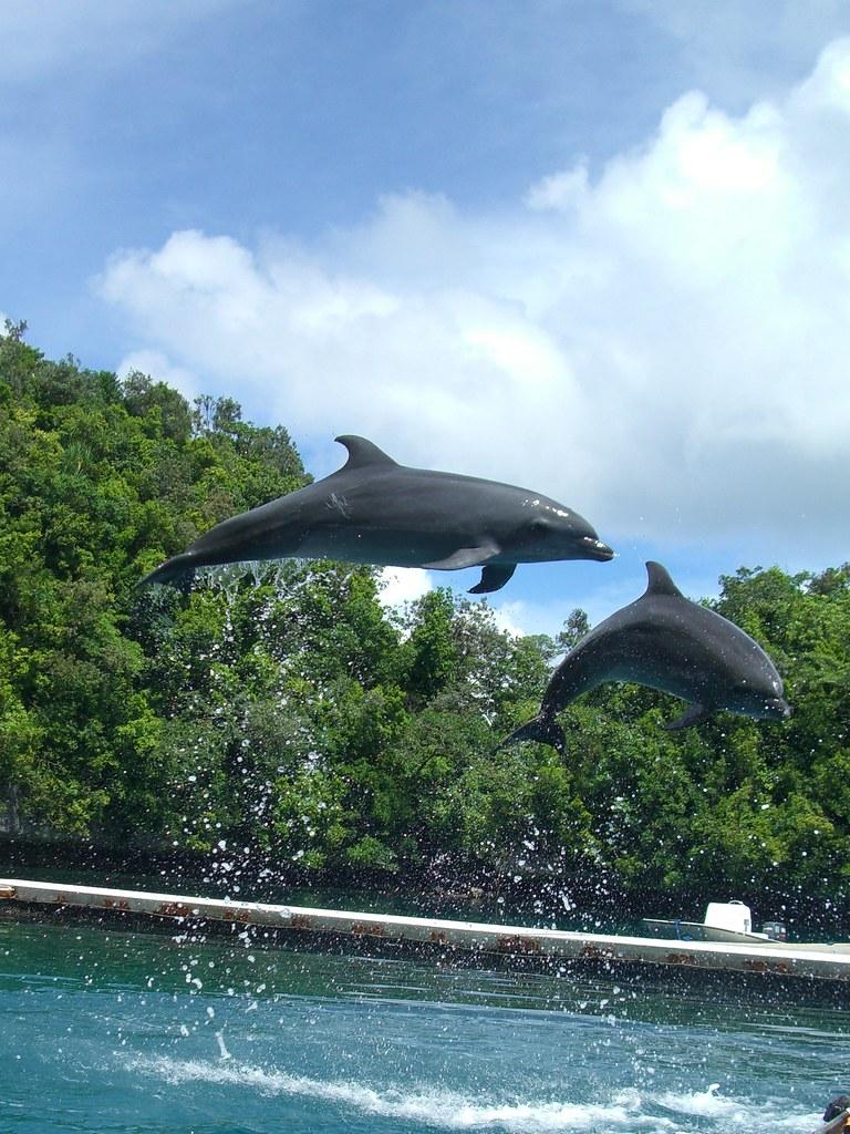 Palau Dolphin