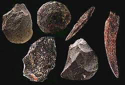 Tools of Homo habilis