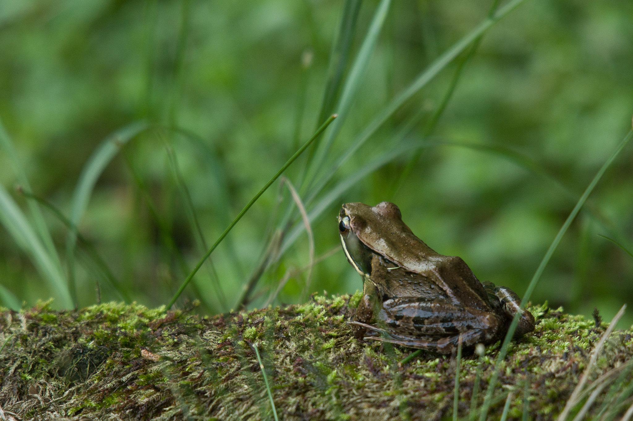夢幻湖赤蛙一張流