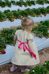 Little Bow Pleat dress