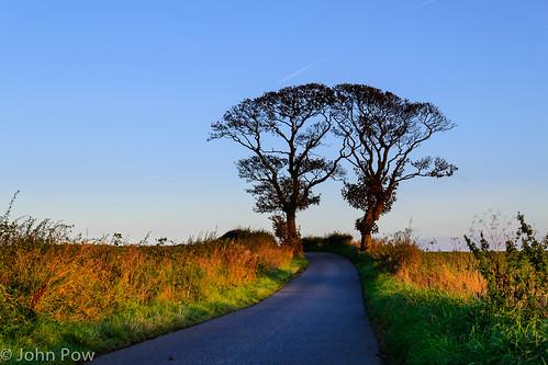 autumn colour tree fall sunrise scotland kissing unitedkingdom fife kirkcaldy