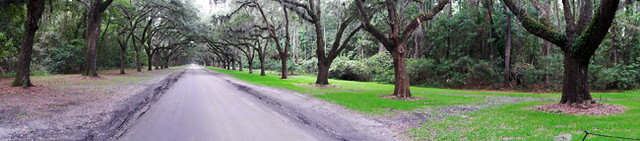 Wormsloe avenue of oaks