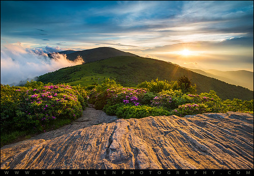 appalachiantrail northcarolina nc tennessee tn roanmountain rhododendron bloom spring sunset landscape outdoors outdoorphotographer mountains flowers springflowers