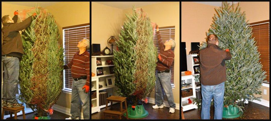undoing the tree