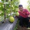 Melon kinanti
