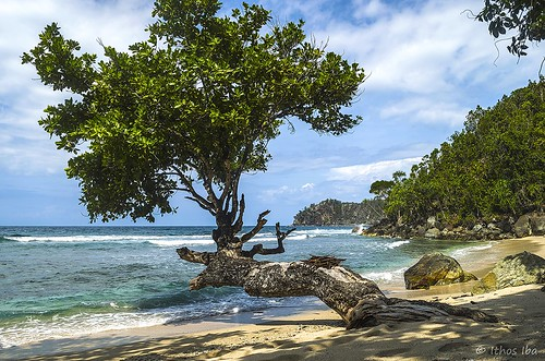tree beach landscape nikon papua jayapura d5100 flickrbronzetrophygroup pasirenam