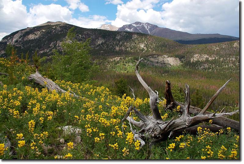 Longs Peak as seen from Ouzel lake trail 2