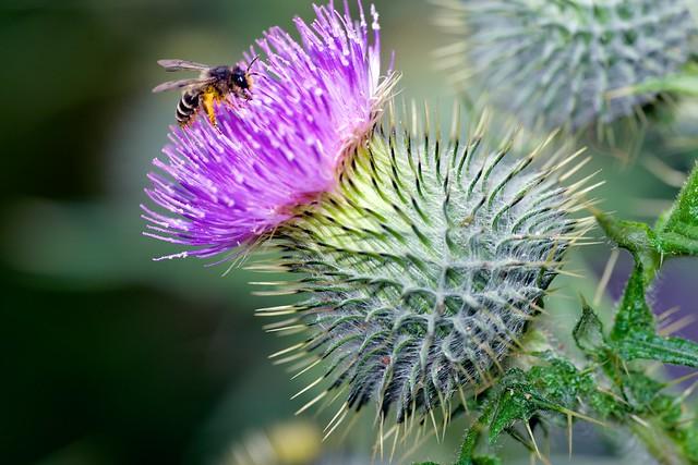 2014:07:10 - Glasgow Botanic Gardens - Sigma 180mm Macro - 016