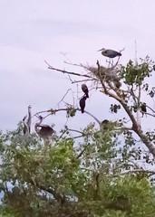 Herons & Cormorants 20140712