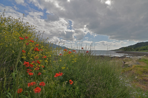 flowers ireland sea sky beach landscape nice lough view south north quay carlingford greers