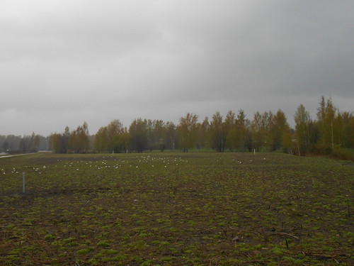 Peltonäkymä, Pohjois-Tapiola Espoo 9.5.2014