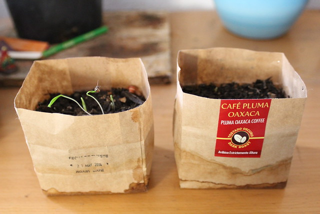 sprouting in empty coffee packages.