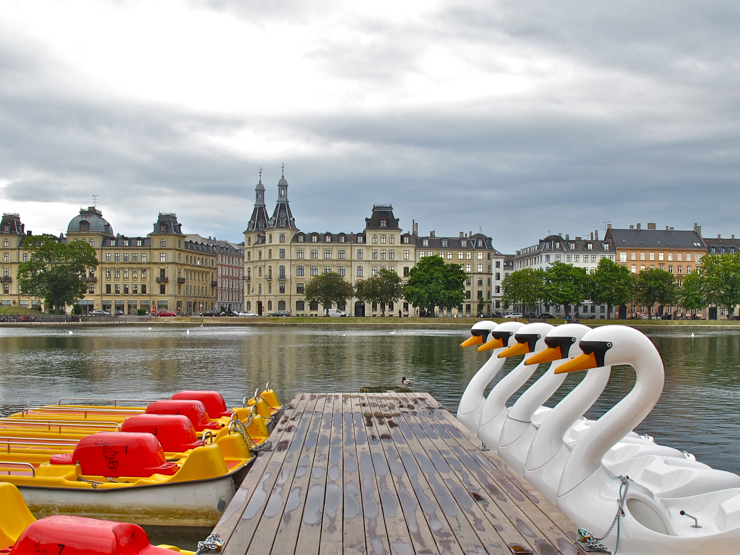 Swan fleet