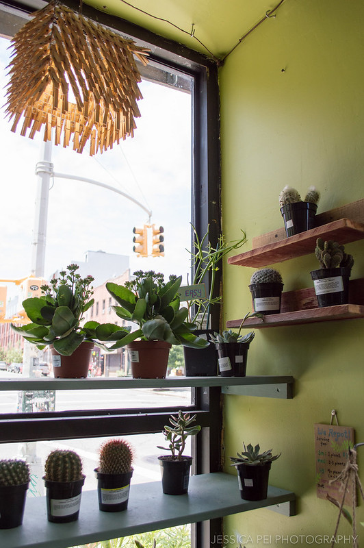 Cacti Plant Shop in Brooklyn Williamsburg New York