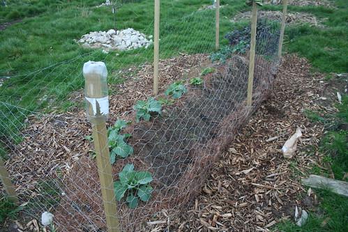 Garden Bed, Paddock NW - 2014-06-27 - 01 - Mulch shifted for garlic