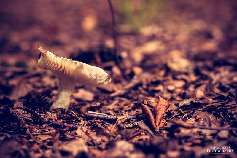 Another mushroom in wildlife