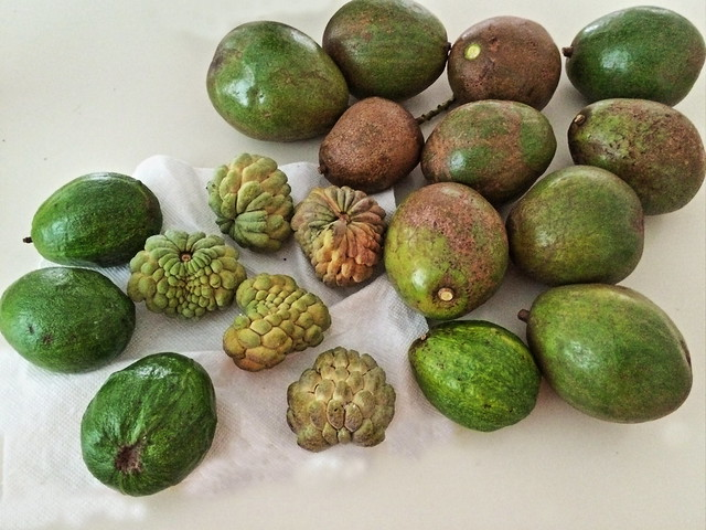 Avocados and Annones 20140814