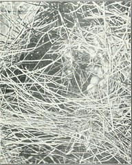 "Image from page 220 of ""Wild birds and their haunts (a book for students and sportsmen)"" (1922)"