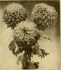 """Image from page 854 of """"The American florist : a weekly journal for the trade"""" (1885)"""