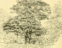 "Image from page 124 of ""Essex naturalist: being the journal of the Essex Field Club"" (1887)"