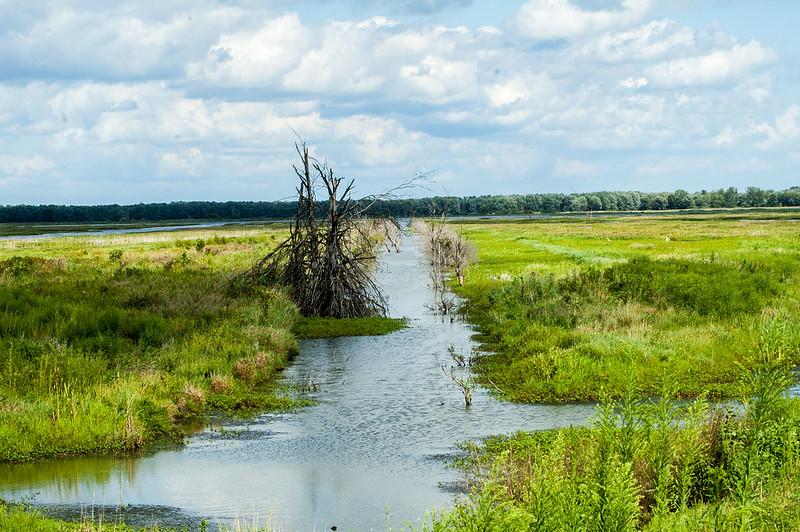 Goose Pond Fish & Wildlife Area