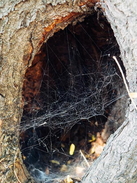 Aquí hay arañas