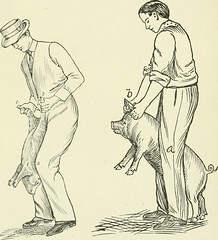 "Image from page 287 of ""Restraint of domestic animals; a book for the use of students and practitioners; 312 illustrations from pen drawings and 26 half tones from original photographs"" (1909)"
